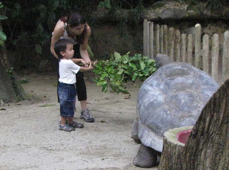 Young boy feeding giant tortoise at the Singapore Zoo